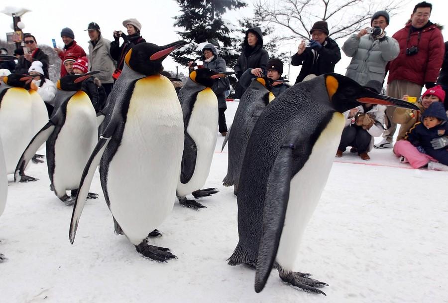 Знакомства на пингвинов не